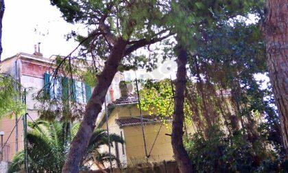 Crolla un albero nei giardini di Villa Palmizi a Bordighera