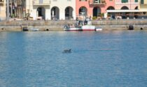 Un delfino amico di Imperia avvistato nel porto di Oneglia, le foto