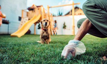 Deiezioni canine ecco dove sono vietate