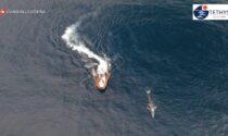 Misurata col drone: Wally la balenottera grigia in tour nel Mediterraneo