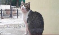 """Sbranata da un cane """"Codamozza"""", era la gatta mascotte di San Lorenzo al mare"""