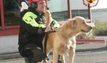 """Morto a 14 anni """"Lucky"""" il cane vigile del fuoco di Imperia"""