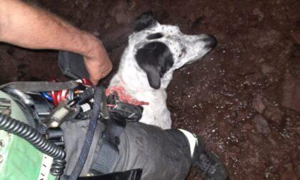 Cane cade in un pozzo, recuperato incolume