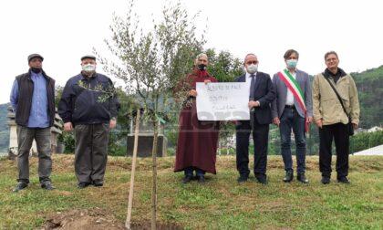Le tre religioni monoteiste a Camporosso piantano un olivo per la pace