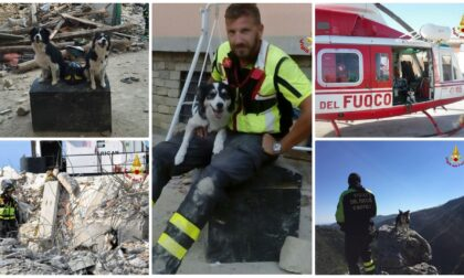 Addio a Canada il cane dei vigili del fuoco che salvò parecchie vite sotto le macerie