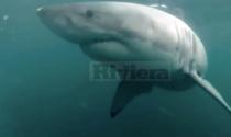 Avvistato un squalo nelle acque di capo Ampelio, ma il video è un fake