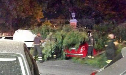 Grosso ramo crolla su un'auto ai giardini pubblici, paura a Ventimiglia