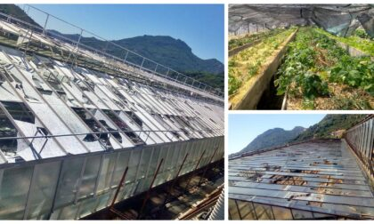 Decine di aziende agricole e floricole devastate dalla grandine a Ventimiglia