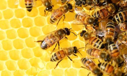 Addio a un vaso di miele su quattro per il clima pazzo degli ultimi mesi
