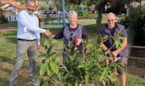 Piantato nel giardino del Corsaro Nero il ficus donato da Rosalba Copelli