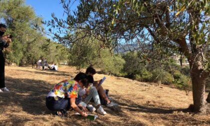 Affidato al Ruffini l'oliveto sperimentale a Garbella