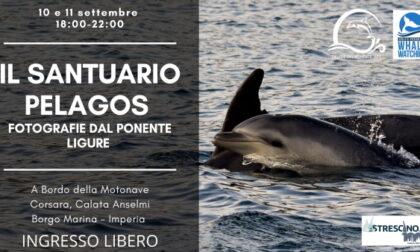 Visita gratuita sulla barca del Santuario dei Cetacei