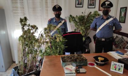 Coltivava marijuana in casa. I Carabinieri sentono l'odore e lo scoprono