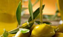 Confagricoltura Liguria: per l'olio un'annata difficile con un calo del 50 %