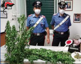 Arrestata donna di 62 anni che curava una piantagione di marijuana